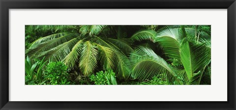 Framed Palm fronds and green vegetation, Seychelles Print