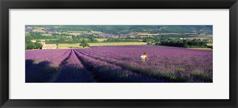 Framed Woman walking through fields of lavender, Provence-Alpes-Cote d'Azur, France Print