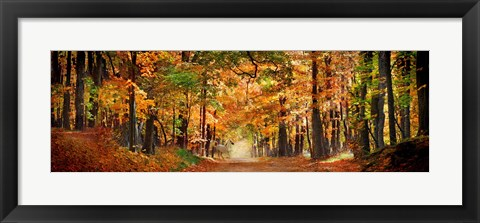 Framed Horse running across road in fall colors Print