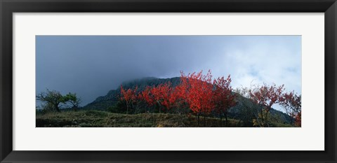 Framed Trees in autumn at dusk, Provence-Alpes-Cote d'Azur, France Print
