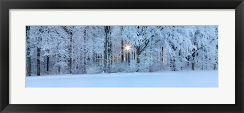 Framed Forest in winter at sunrise, Swabian Alb, Baden-Wurttemberg, Germany Print