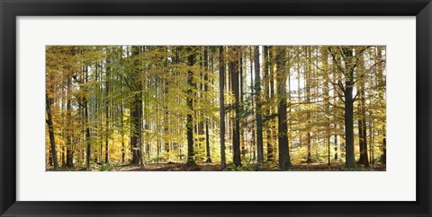 Framed Trees in autumn, Hohenlohe, Baden-Wurttemberg, Germany Print