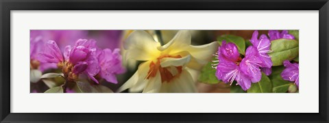 Framed Details of pink and yellow flowers Print