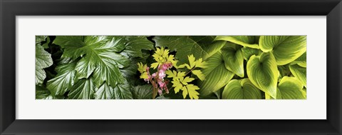 Framed Details of luscious leaves Print
