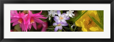 Framed Flowers in pastel colors Print