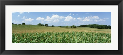 Framed Corn Crop In A Field, Wyoming County, New York State, USA Print