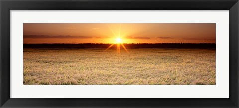 Framed Rice Field, Sacramento Valley, California, USA Print