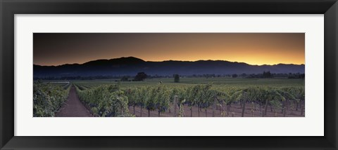 Framed Vineyards on a landscape, Napa Valley, California, USA Print