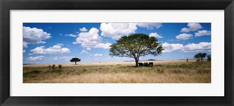 Framed Elephants, Kenya, Africa Print