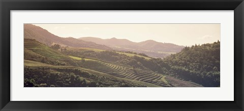 Framed High angle view of a vineyard in a valley, Sonoma, Sonoma County, California, USA Print