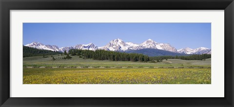 Framed Flowers in a field with a mountain in the background, Sawtooth Mountains, Sawtooth National Recreation Area, Stanley, Idaho, USA Print