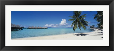 Framed Palm Tree On The Beach, Moana Beach, Bora Bora, Tahiti, French Polynesia Print