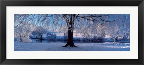Framed Winter Trees Perkshire Scotland Print