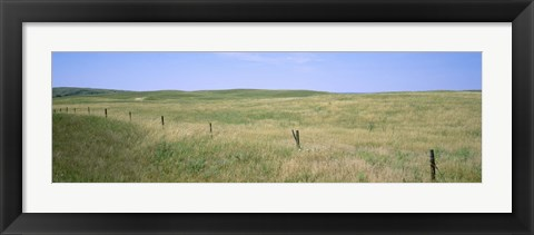 Framed Grass on a field, Cherry County, Nebraska, USA Print