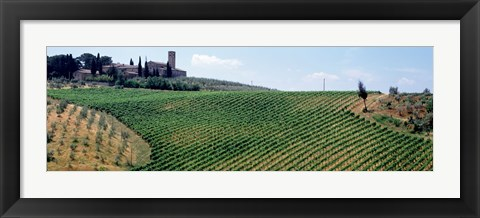 Framed Vineyards and Olive Grove outside San Gimignano Tuscany Italy Print
