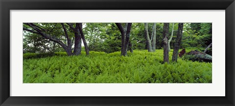 Framed Trees in a forest, North Carolina, USA Print