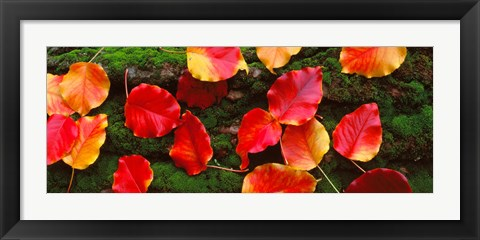 Framed Fall Leaves Sacramento CA USA Print
