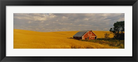Framed Barn in a wheat field, Palouse, Washington State, USA Print