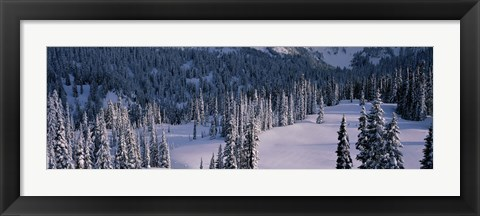 Framed Fir Trees, Mount Rainier National Park, Washington State, USA Print