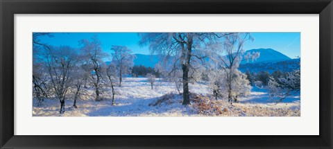Framed Trossachs National Park, Scotland, United Kingdom Print