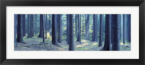 Framed Trees in a forest, South Bohemia, Czech Republic Print