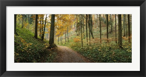 Framed Road passing through a forest, Baden-Wurttemberg, Germany Print