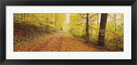 Framed Road covered with autumnal leaves passing through a forest, Baden-Wurttemberg, Germany Print