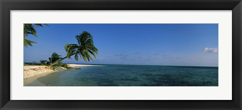 Framed Palm tree overhanging on the beach, Laughing Bird Caye, Victoria Channel, Belize Print
