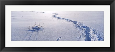 Framed Track on a snow covered landscape, Apennines, Emilia-Romagna, Italy Print