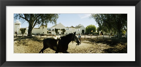 Framed Horse running in an paddock, Gerena, Seville, Seville Province, Andalusia, Spain Print