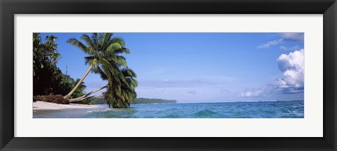 Framed Palm trees on the beach, Indonesia Print