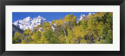 Framed Forest with snowcapped mountains in the background, Maroon Bells, Aspen, Pitkin County, Colorado, USA Print
