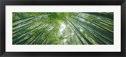 Framed Low angle view of bamboo trees, Hokokuji Temple, Kamakura, Kanagawa Prefecture, Kanto Region, Honshu, Japan Print