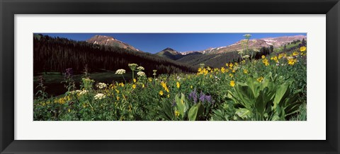Framed Wildflowers in a forest, West Maroon Pass, Crested Butte, Gunnison County, Colorado, USA Print
