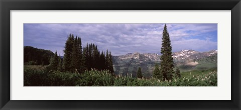 Framed Forest, Washington Gulch Trail, Crested Butte, Gunnison County, Colorado (horizontal) Print