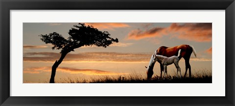 Framed Horse mare and a foal grazing by tree at sunset Print