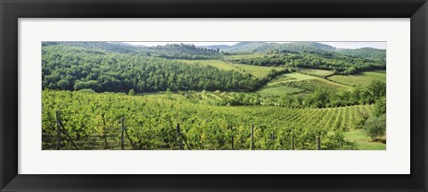 Framed Vineyards in Chianti Region, Tuscany, Italy Print