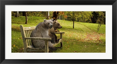 Framed Bears sitting on a bench Print