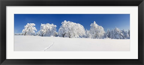 Framed Snow covered Common Beech (Fagus Silvatica) trees, Schauinsland, Black Forest, Baden-Wurttemberg, Germany Print