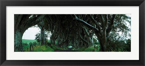 Framed Trees at the Dark Hedges, Armoy, County Antrim, Northern Ireland Print