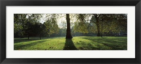 Framed Trees in a park, St. James's Park, Westminster, London, England Print