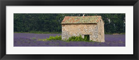 Framed Stone building in a lavender field, Provence-Alpes-Cote D'Azur, France Print