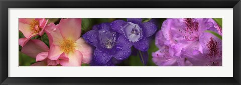 Framed Close-up of pink and purple  flowers Print