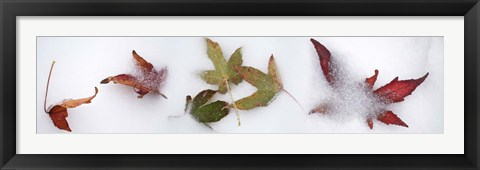 Framed Leaves in the snow Print