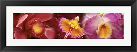 Framed Details of red and violet Orchid flowers Print