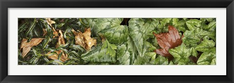 Framed Details of green leaves Print