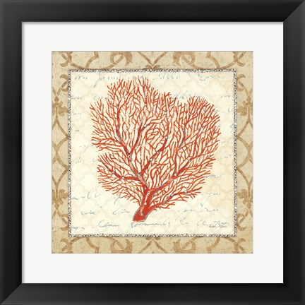 Framed Coral Beauty Light III Print