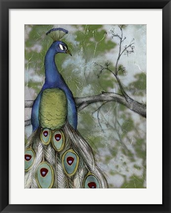 Framed Peacock Reflections II Print