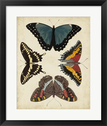 Framed Display of Butterflies I Print