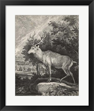 Framed Woodland Deer II Print